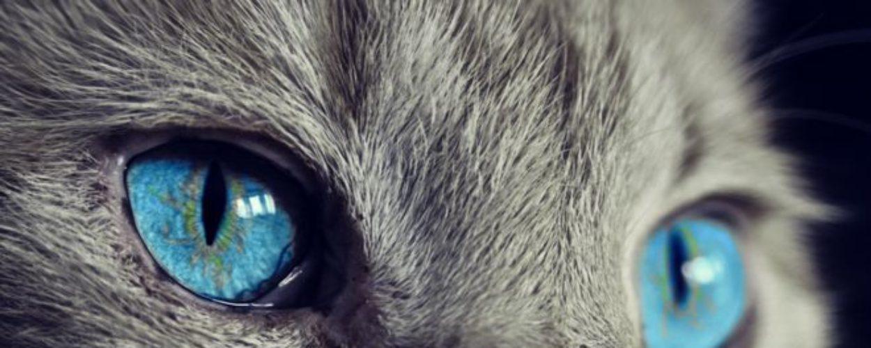 Como a evolução transformou os gatos em animais solitários