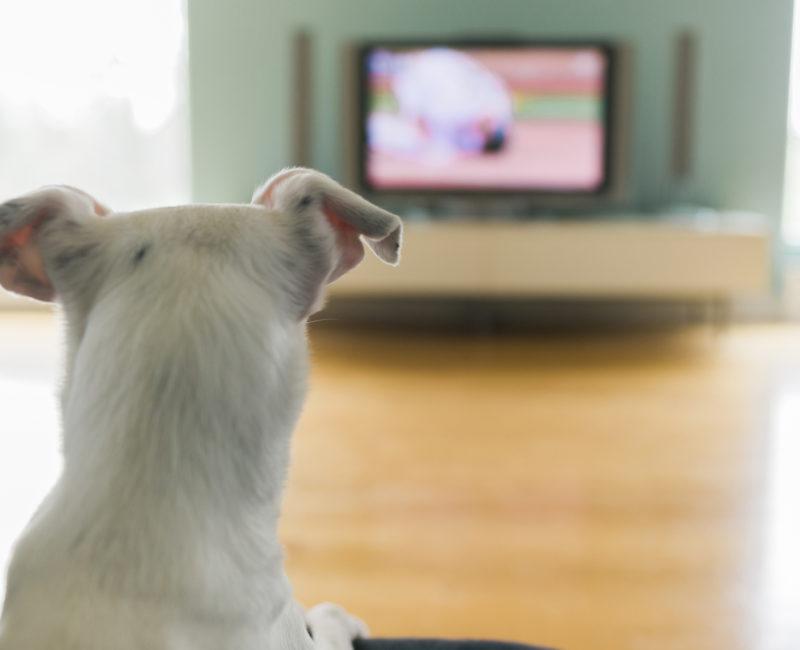 Canal de televisão para cachorros é lançado na Alemanha