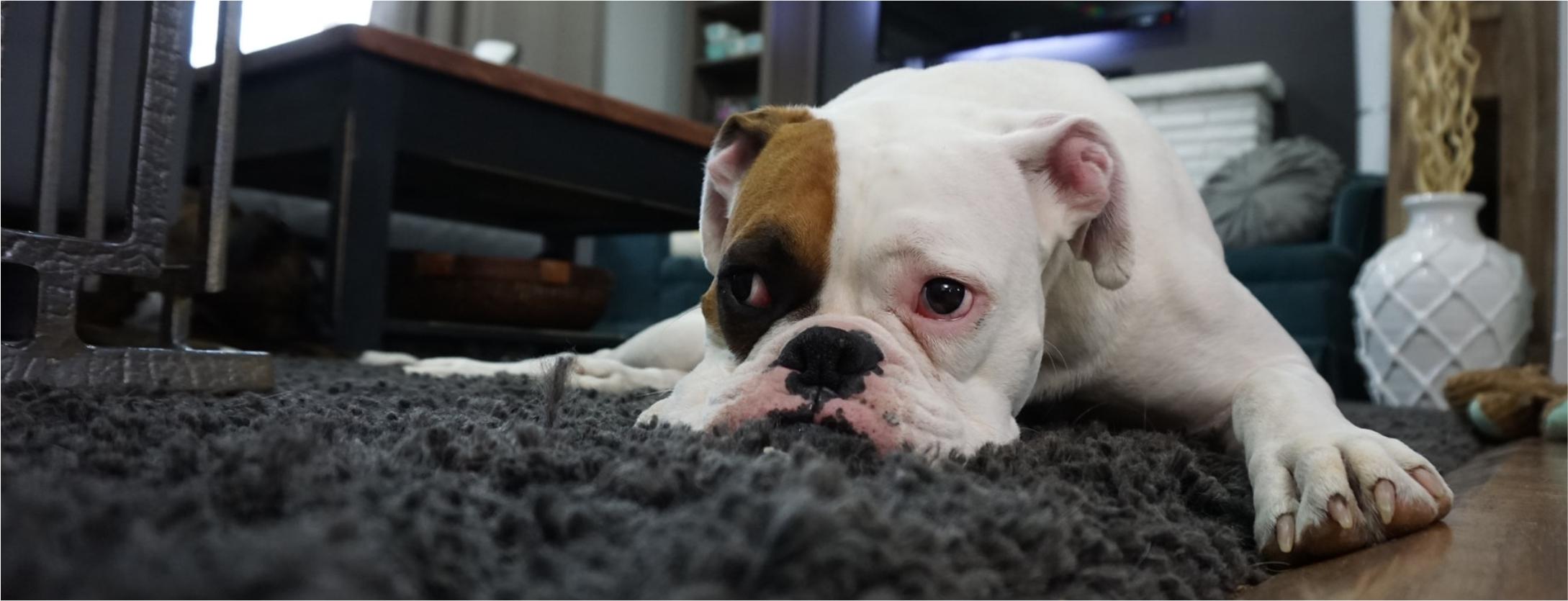 Produtos de limpeza podem causar alergia em pets