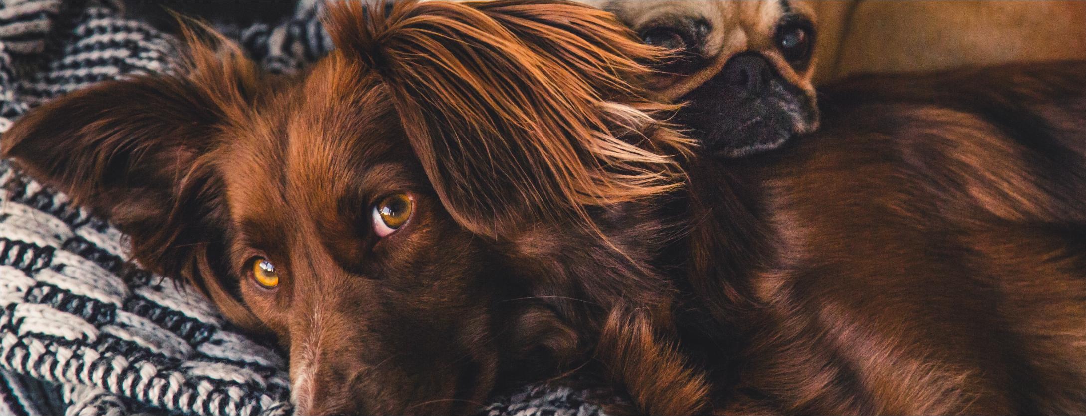 Inverno para pets: respostas a algumas perguntas comuns