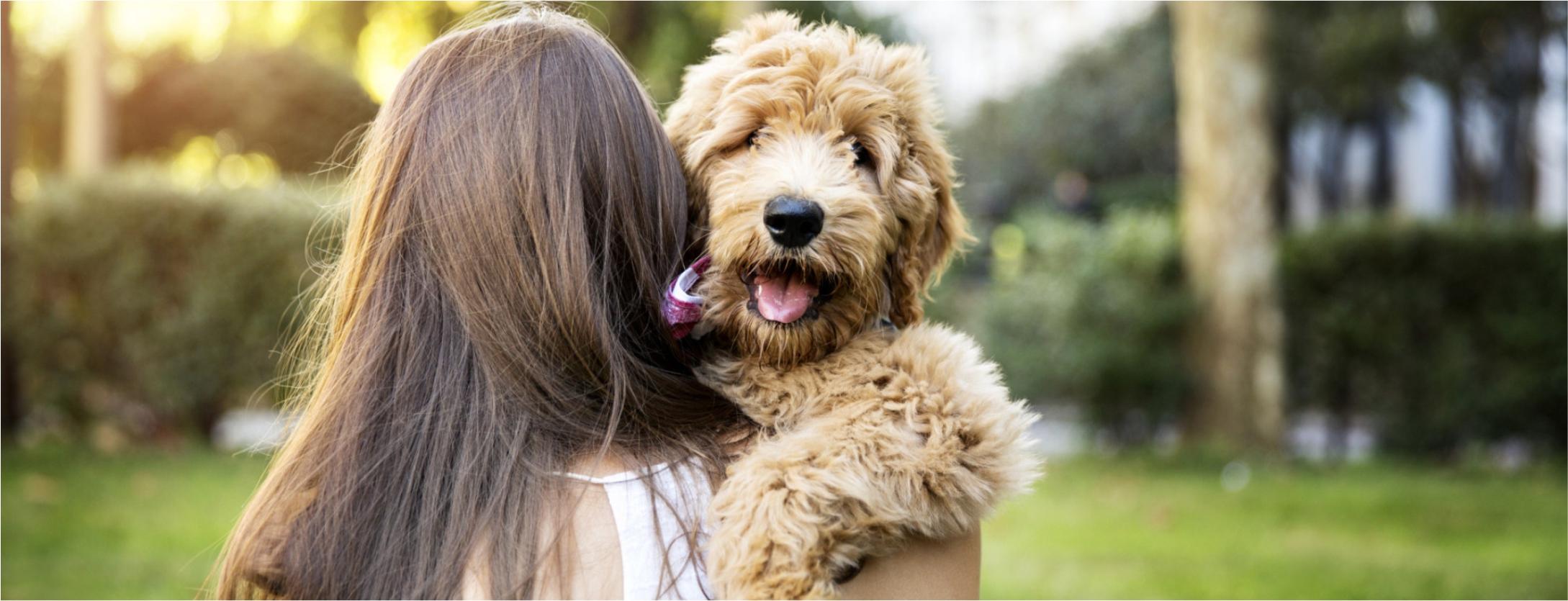 Como os cães escolhem o seu humano preferido