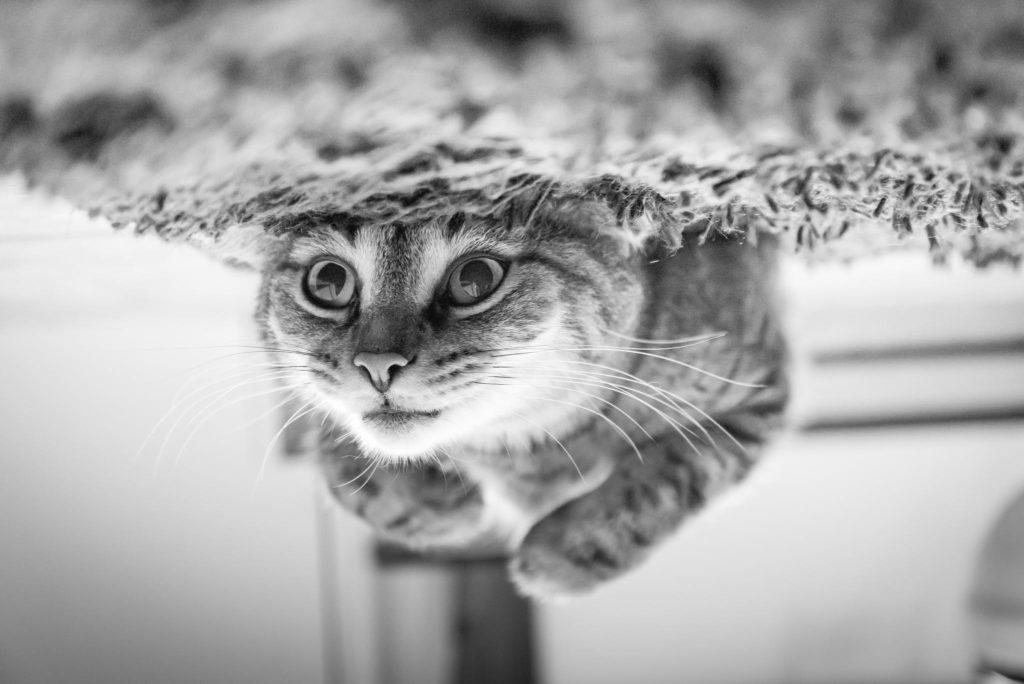 Quanto tempo vivem os gatos