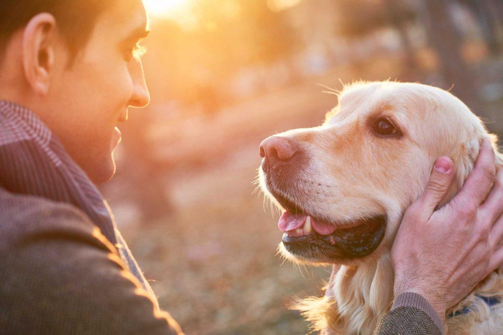Entenda por que o segmento de Pet Shops é um mercado promissor