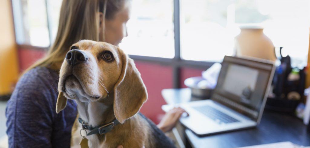 dificuldades enfrentadas pelo empreendedor Pet Shop