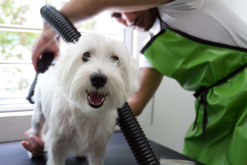 Dicas para aumentar o faturamento de seu pet shop