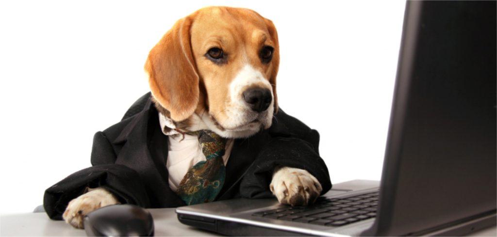 5 dicas simples para otimizar a gestão do seu Pet Shop