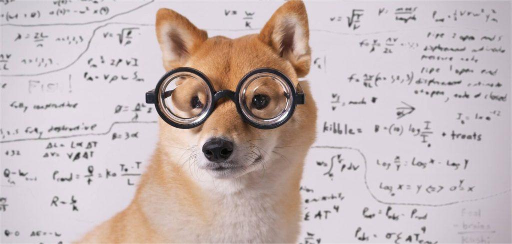 Propaganda para Pet Shop: 5 dicas para divulgar seu negócio