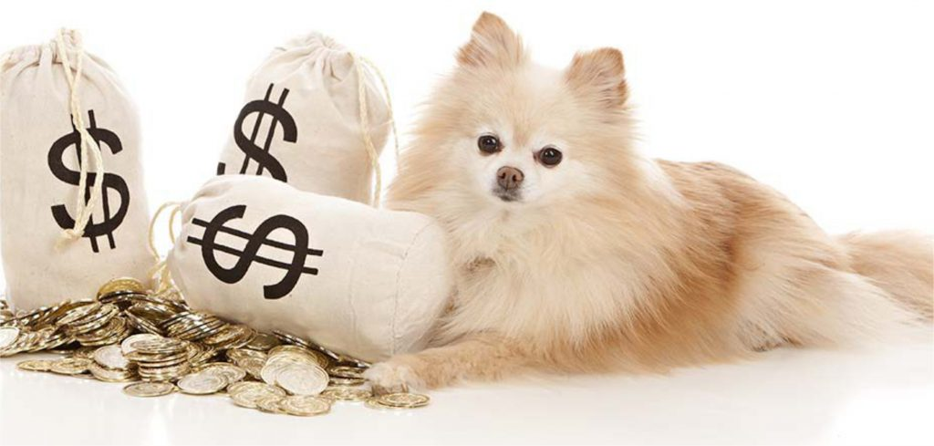 Como calcular o lucro do seu Pet Shop?