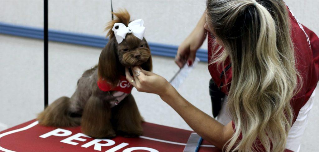 Trabalhar em Pet Shop