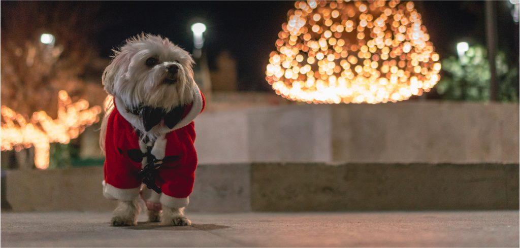 4 dicas para seu Pet Shop vender mais durante as Festas