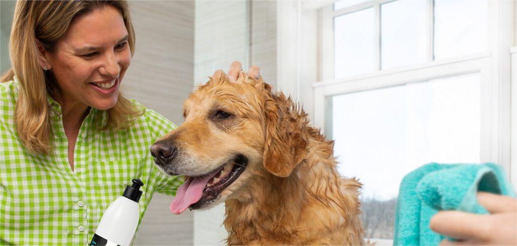 Como escolher a cartela de produtos e serviços do Pet Shop?