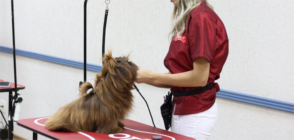 Serviços diferenciados para Pet Shops: Cardápio de banhos